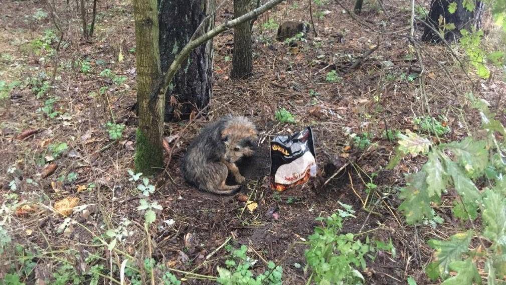 pies przywiązany do drzewa nowe miasto - FB: Straż Miejska Miasta Poznania
