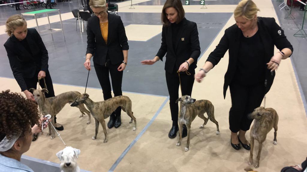 wystawa psów MTP poznań 2018 - Michał Jędrkowiak