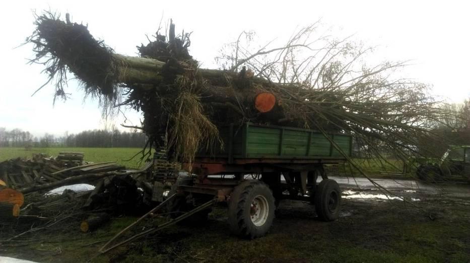 drzewa wycinka drewno - KPP Grodzisk - KPP Grodzisk