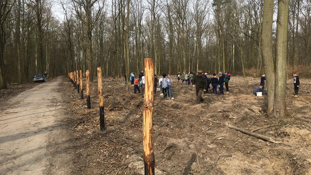 las marceliński sadzenie drzew - Adam Michalkiewicz