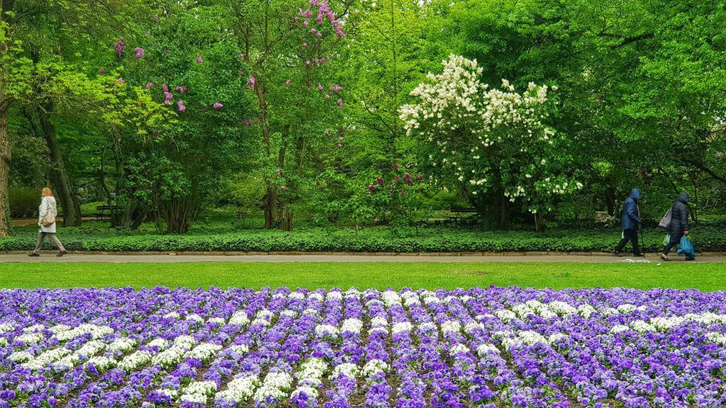 ogród botaniczny UAM - Michał Jędrkowiak