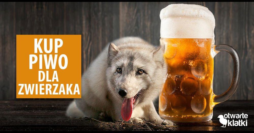 piwo dla zwierzaka - wroclaw.pl