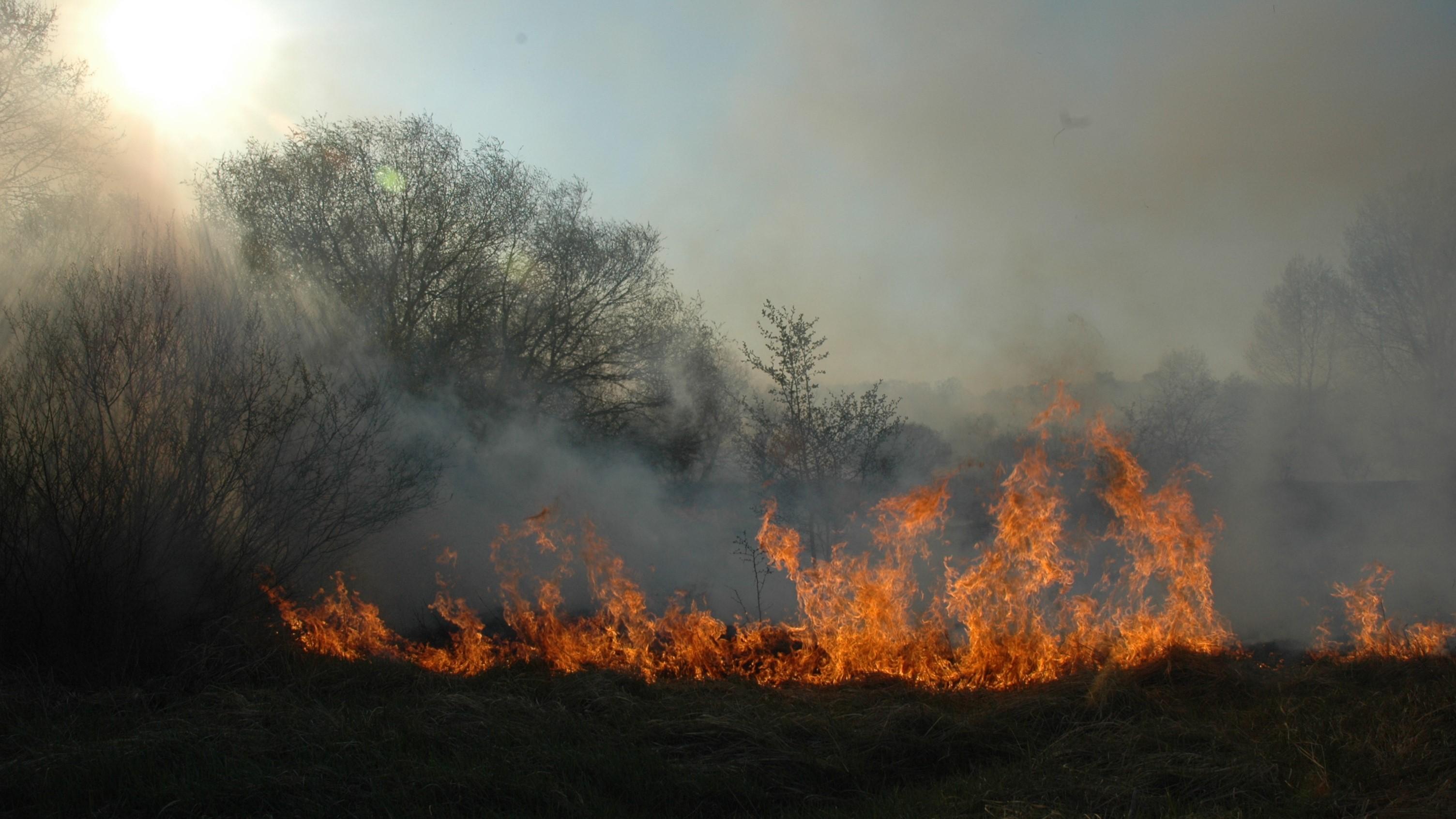 las pożar straż pożarna ogień łąka - Wojtek Wardejn