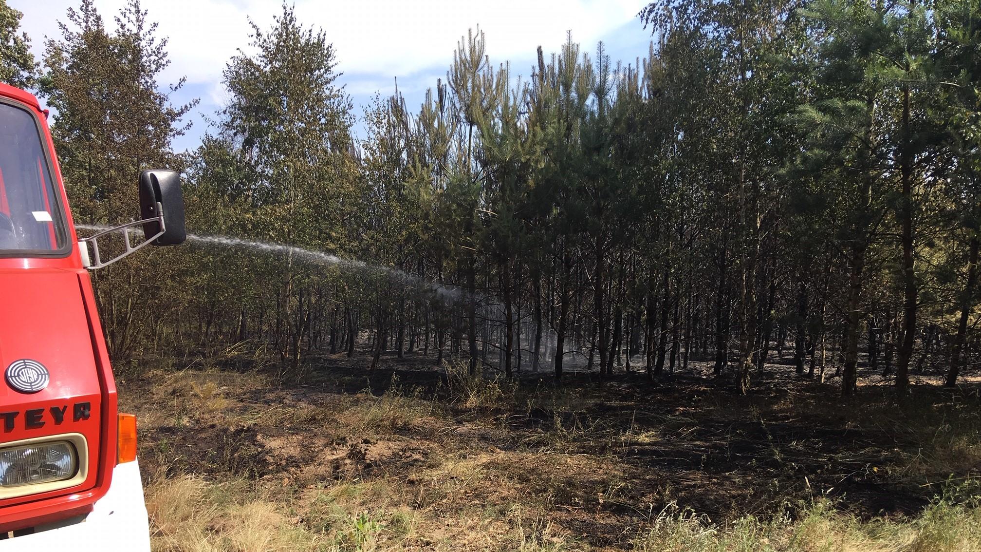 pożar lasu w rychliku - Przemysław Stochaj