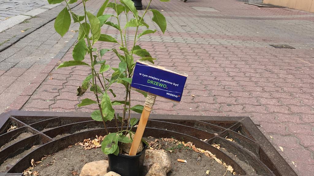 happening wiosna gniezno sadzenie drzew - Rafał Muniak