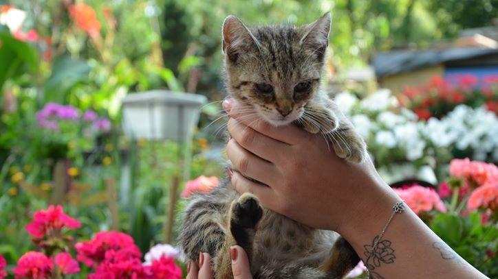 Koty pani Eli - Agata Wojdecka