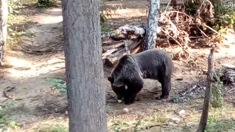 Poznańskie ZOO niedźwiedzie - Leon Bielewicz