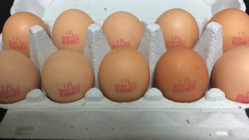 jajka z salmonellą gis - gis.gov.pl