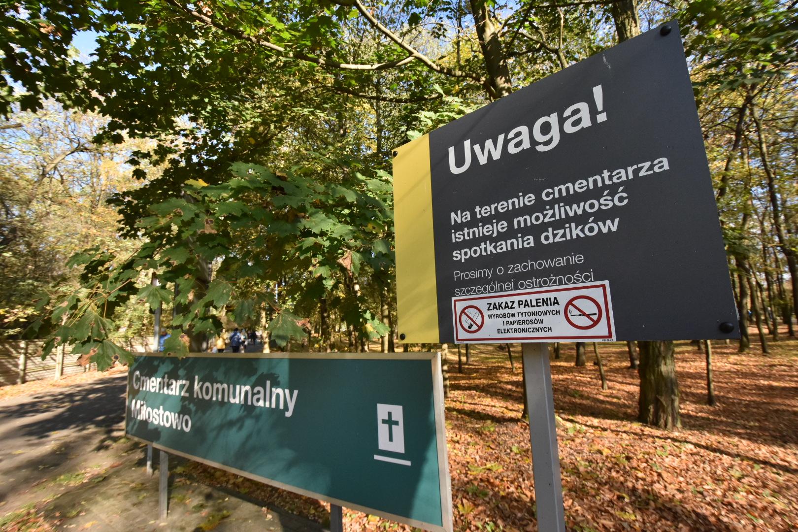 dziki na cmentarzu - Wojtek Wardejn