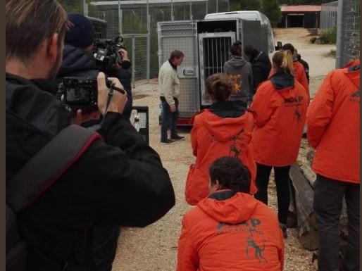 tygrysy dojechały do hiszpanii  - Stichting AAP