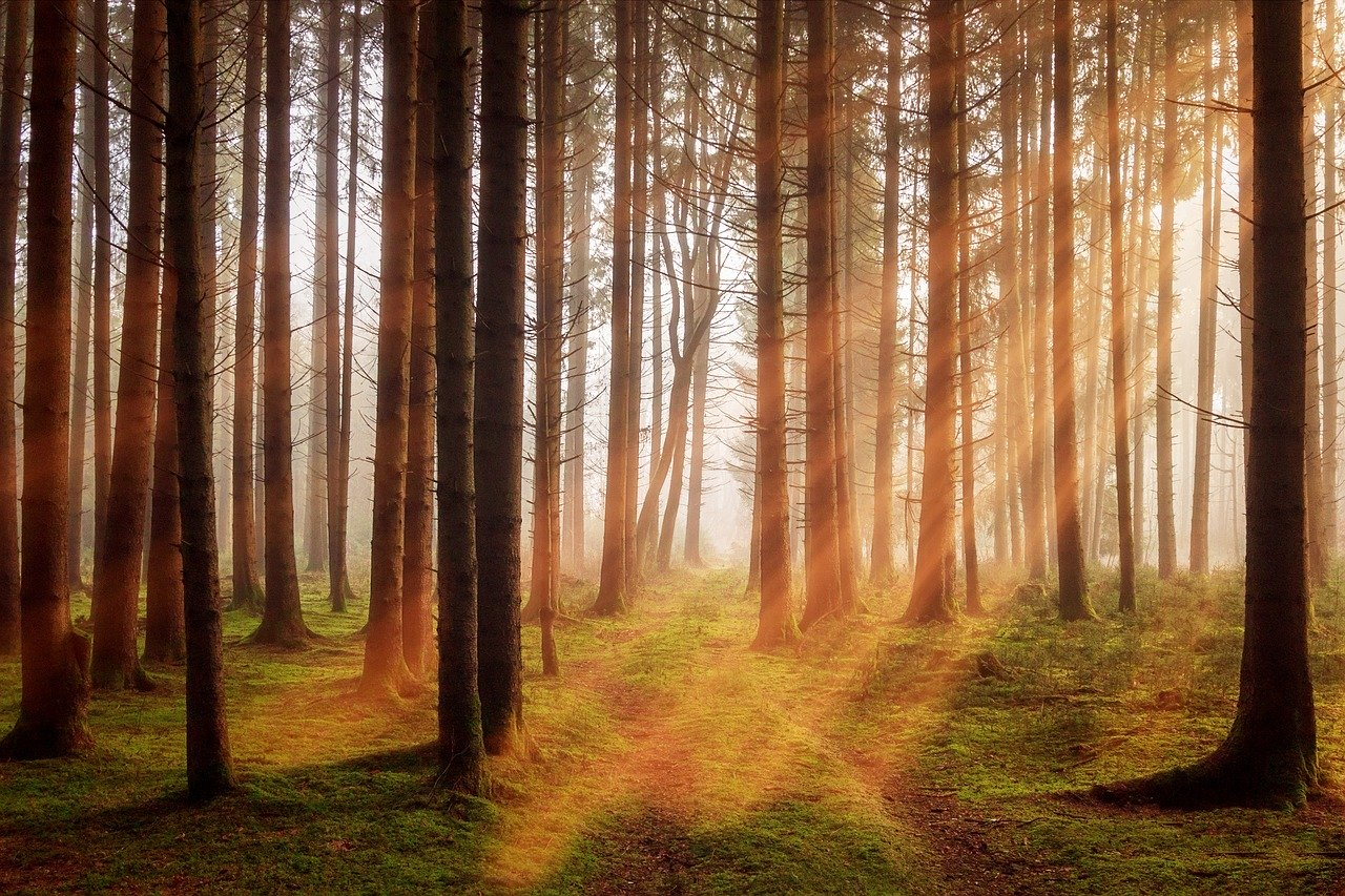 las drzewa - Pixabay