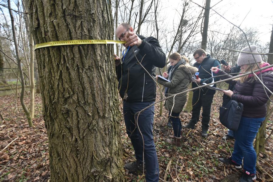 konsultacje drzewne łazarz basen park kasprowicza  - Wojtek Wardejn