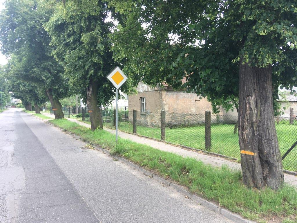 Mieszkańcy Gniezna w obronie lip ulica gajowa - Rafał Muniak