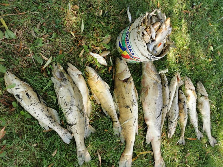 200 kilogramów ryb zatrutych w Zalewie Roszków - FB: Błażej Ogrodowczyk
