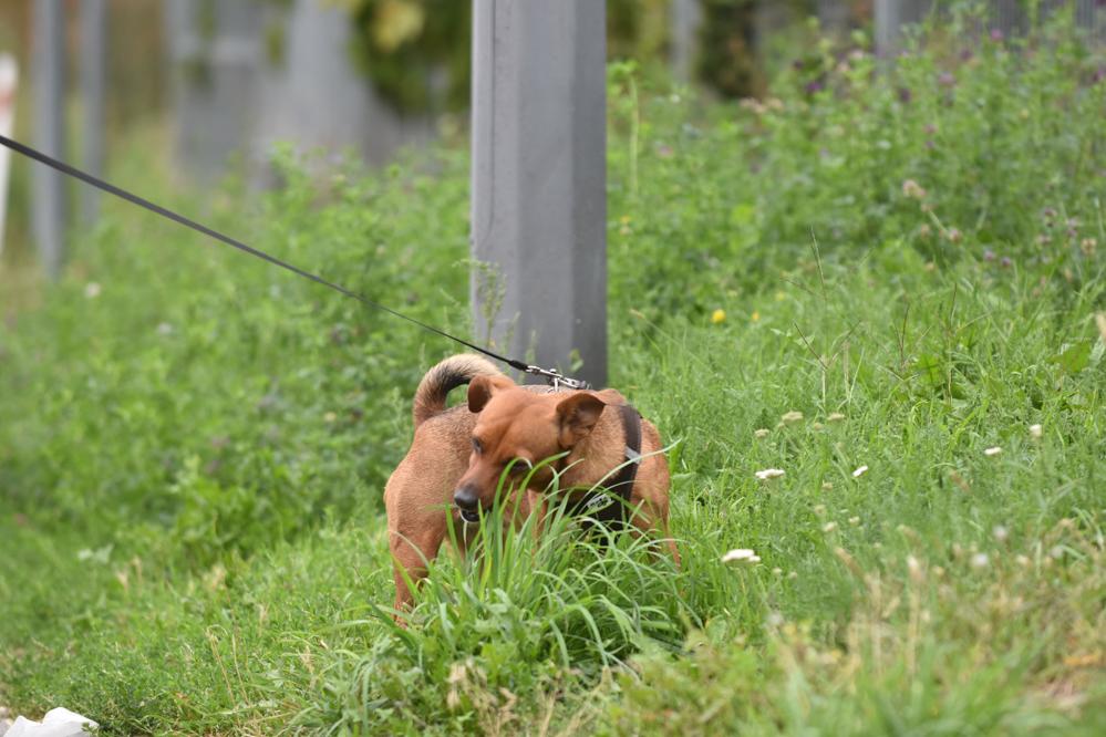 pies poznań  - Wojtek Wardejn