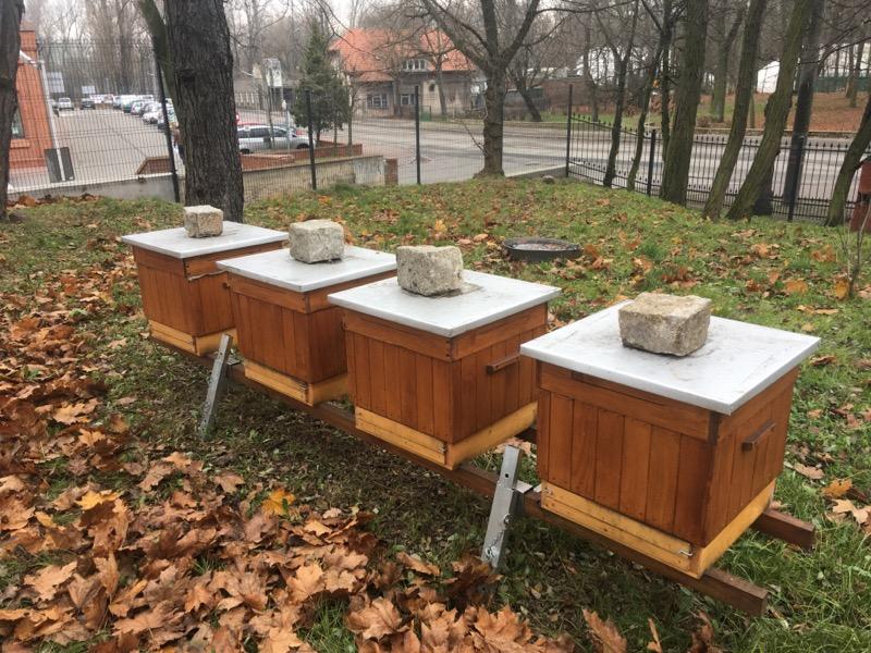 miejska pasieka gniezno ule miejskie - Rafał Muniak