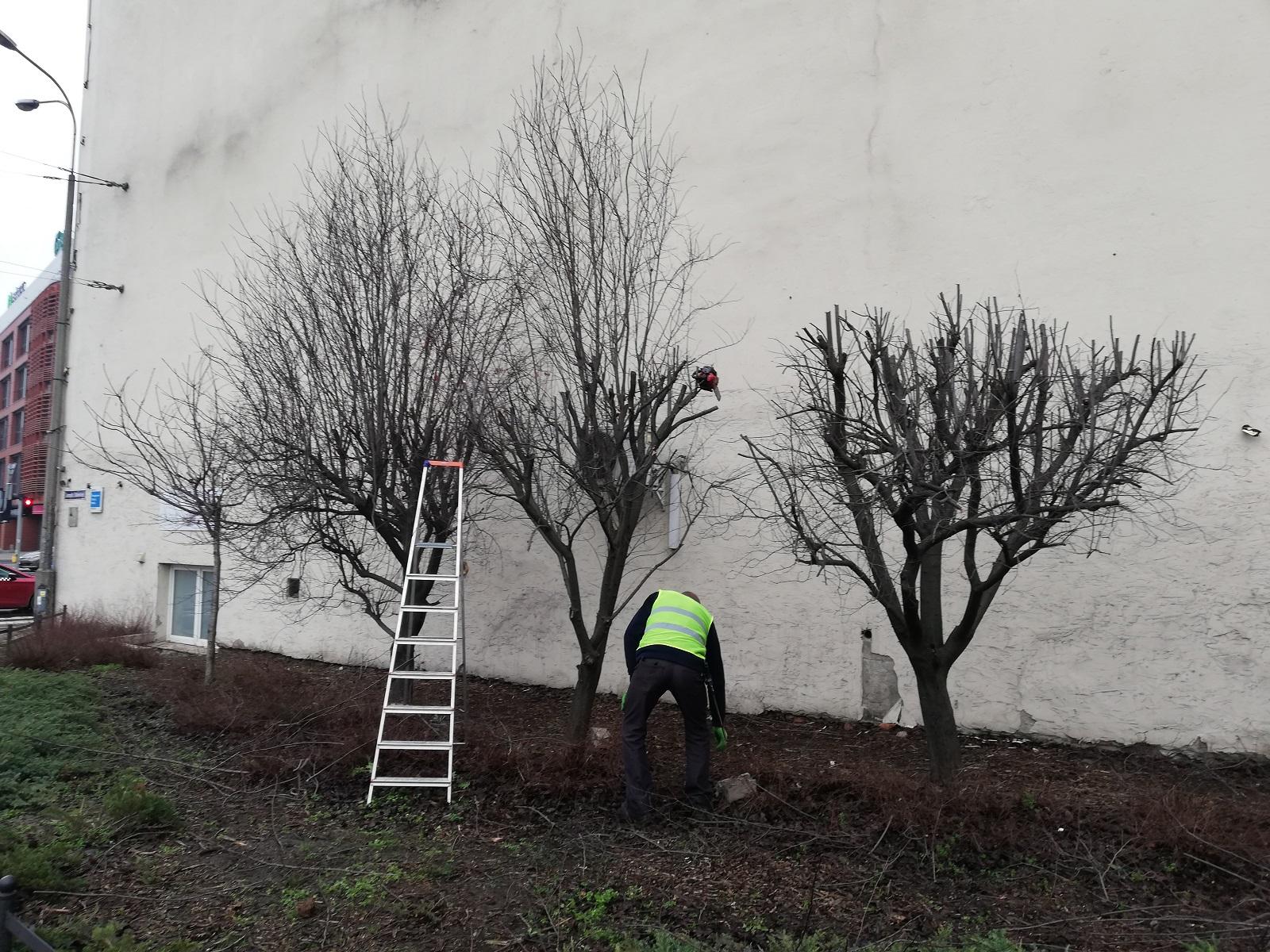 estkowskiego drzewa przycinka - Tomasz Dworek