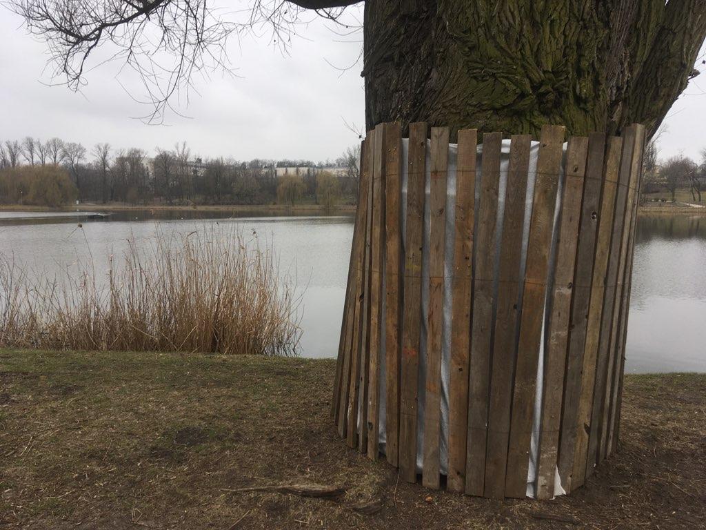 wycinka drzew jezioro jelonek gniezno - Rafał Muniak