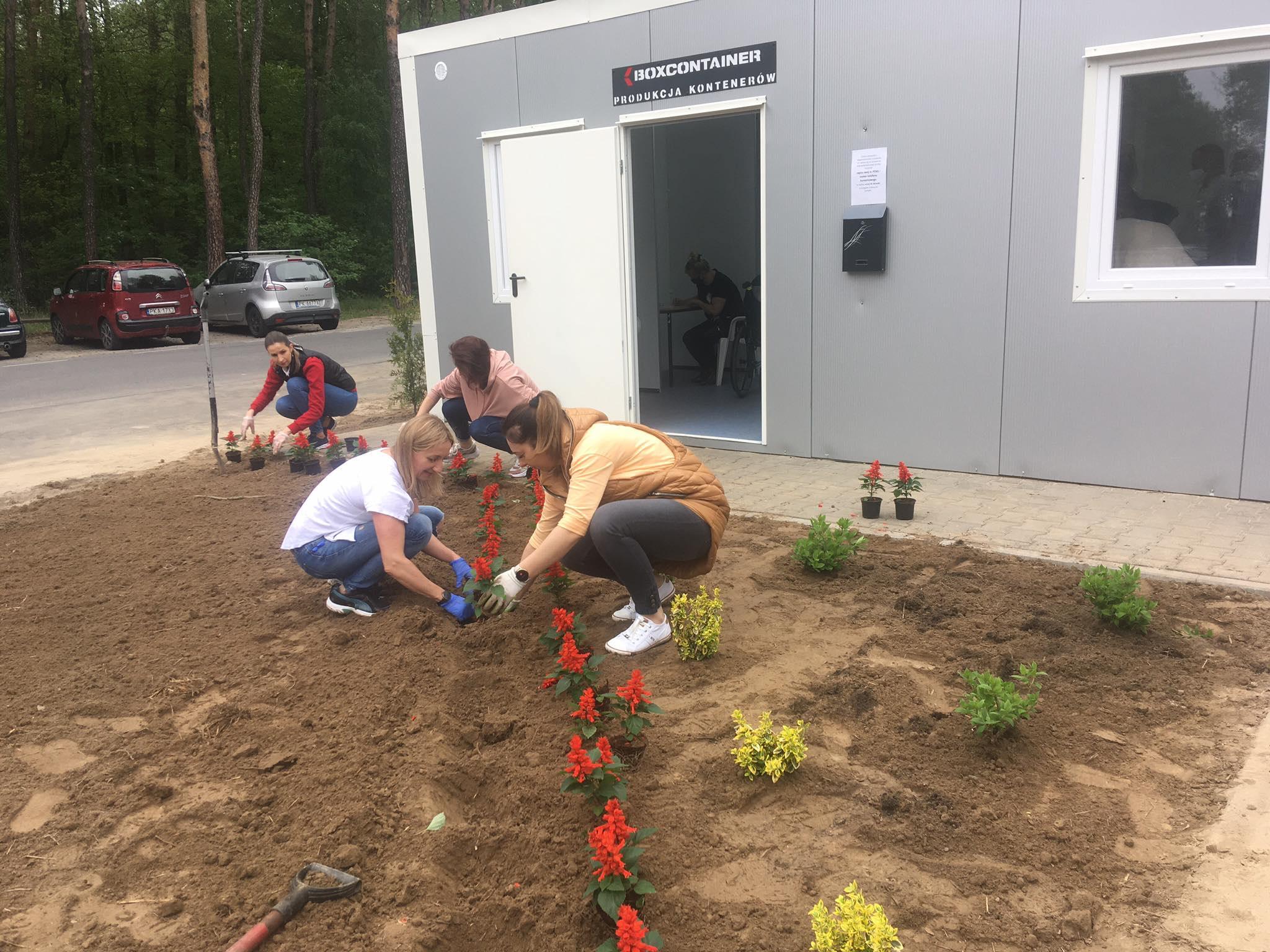 sadzenie kwiatów szpital wolica dla medyków - Danuta Synkiewicz