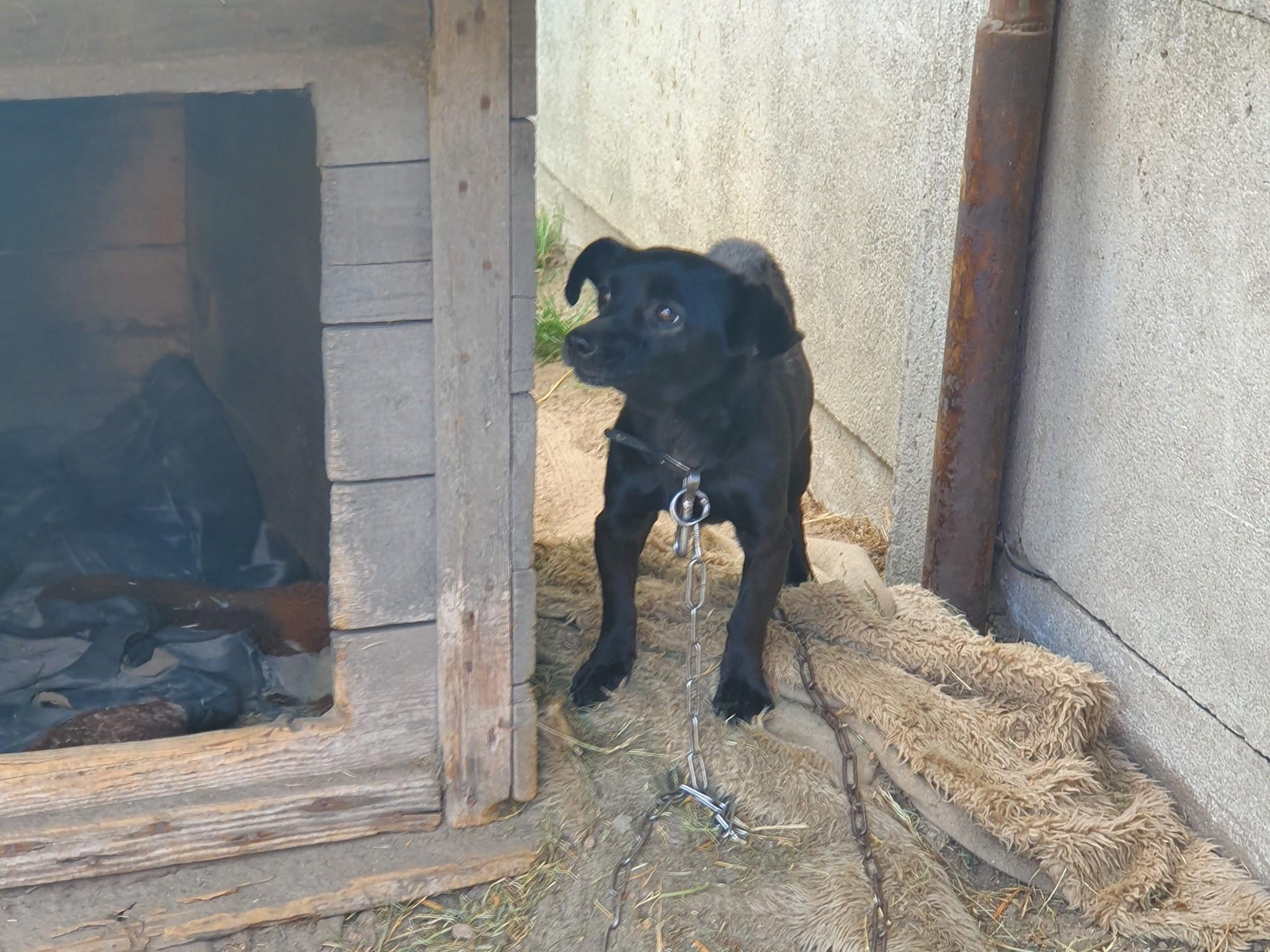 zoofil sośnica - Kaliskie Stowarzyszenie Pomocy Dla Zwierząt Help Animals