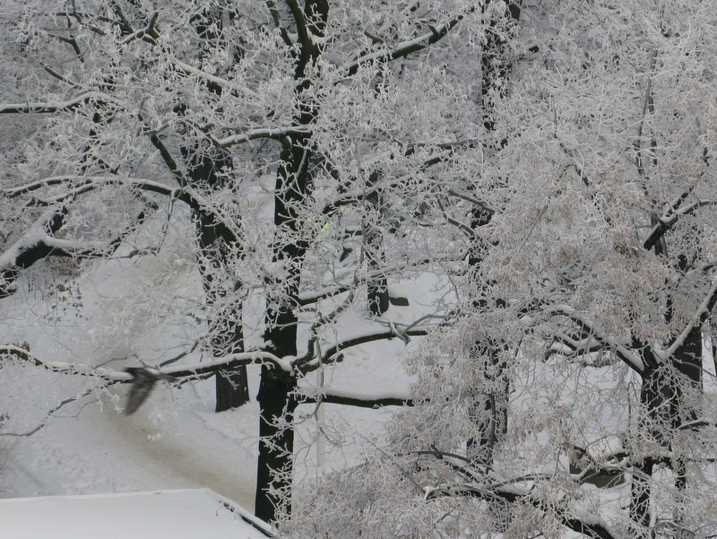 las zimą - Szymon Mazur