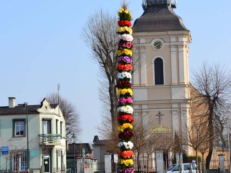 piekna palma koźminek - Danuta Synkiewicz
