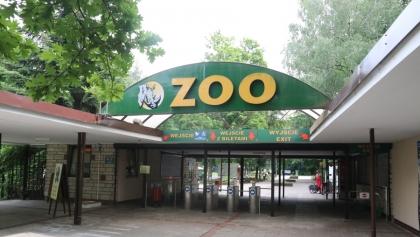 Prezydent Poznania niszczy ZOO - uważa miejski radny i podaje przykład żółwi