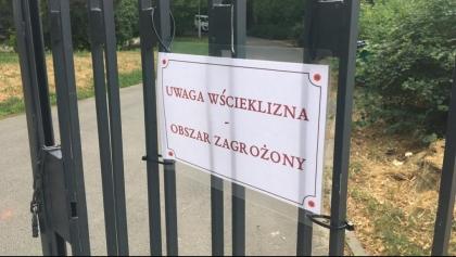 Na poznańskich Jeżycach wykryto przypadek wścieklizny u nietoperza