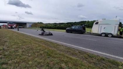 Koń na A2. Autostrada była zablokowana [AKTUALIZACJA]